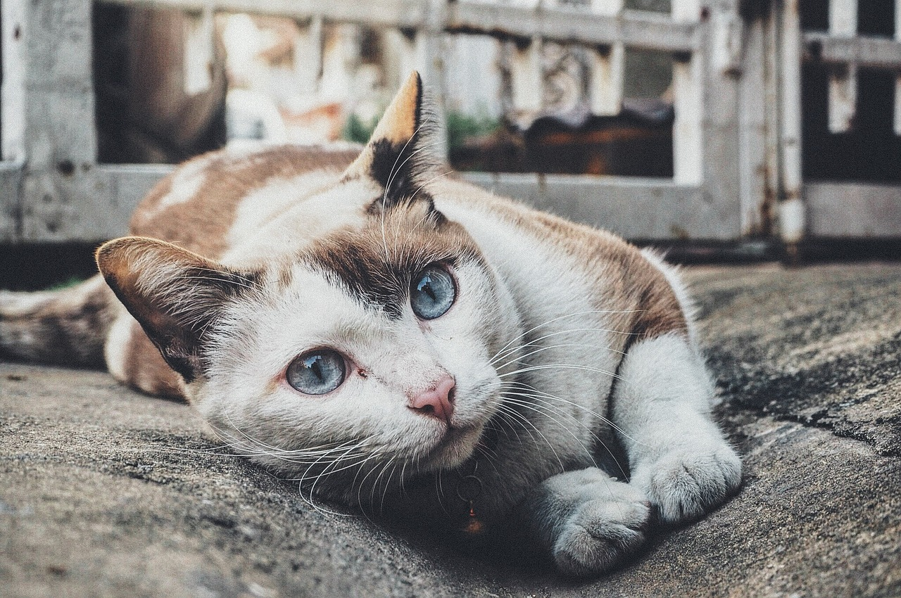 workshop katten krabwandhanger maken intratuin