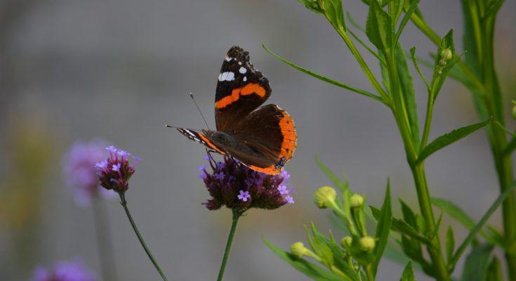 bloemrijke plek insecten nieuwkoop