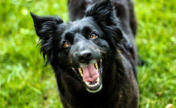 extra controle opruimen hondenpoep