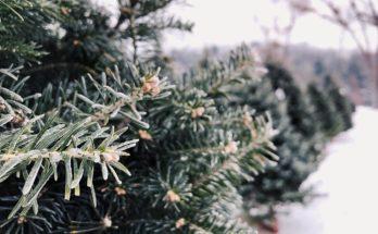 kerstboominzameling gemeente nieuwkoop