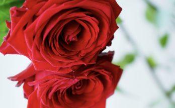 valentijnsmenu bistro de eerste aanleg