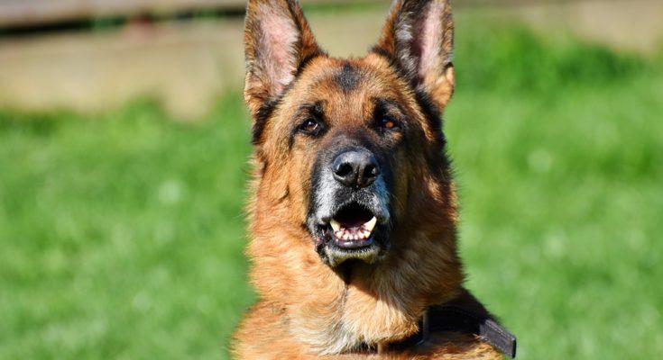 hondenpoep controle nieuwkoop