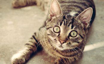 katten stinkdier nieuwkoop