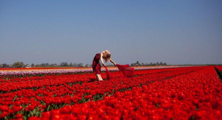 tulip festival nieuwkoop 2020