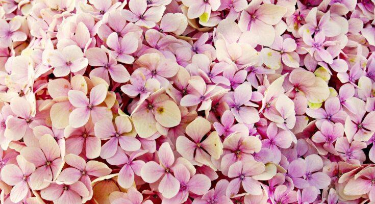 centrum nieuwkoop bloemtjes