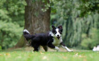 controle hondenpoep nieuwkoop
