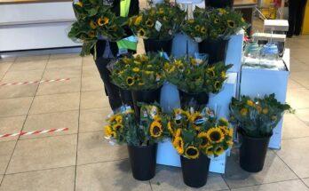 zonnebloemen jumbo nieuwkoop