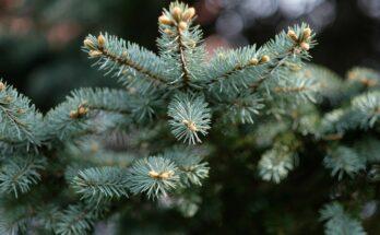 geen geld kerstbomen 2021 inzamelen