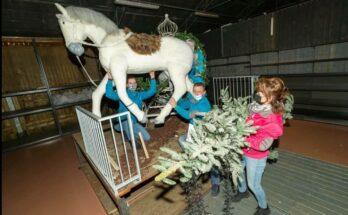 kerstshow intratuin ter aar opruimen
