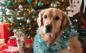 koda kerstwens rijnbeek